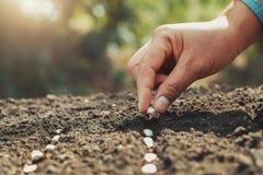 Hand, die Kürbiskern im Gemüsegarten und im hellen warmen pflanzt landwirtschaft lizenzfreie stockfotos