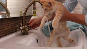 Hand die katje plaatsen in badkamersgootsteen en beginwas het stock videobeelden