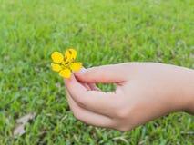 Hand die kleine gele bloem houden Royalty-vrije Stock Foto