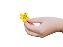 Hand die kleine gele bloem houden Royalty-vrije Stock Fotografie