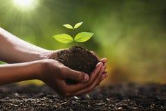 Hand, die kleinen Baum für das Pflanzen hält Konzeptgrün stockfotos