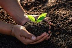 Hand, die kleinen Baum f?r das Pflanzen im Morgenlicht h?lt Konzeptgr?n-Welttag der erde lizenzfreie stockbilder