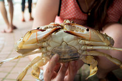 Hand, die Krabbe hält Stockfotos