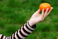 Hand die mandarijntje aanbiedt Royalty-vrije Stock Foto's