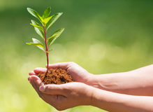 Hand, die neuen Baum hält und pflanzt Lizenzfreie Stockbilder