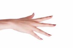 Hand die op een witte achtergrond wordt geïsoleerdf Stock Foto's