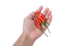 Hand die rode Spaanse peper houden Royalty-vrije Stock Fotografie