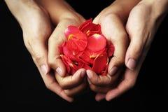 Hand, die rote rosafarbene Blumenblätter anhält Stockfotos
