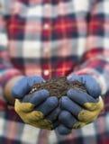 Hand, die Schmutz - gelbes Gänseblümchen hält lizenzfreies stockfoto