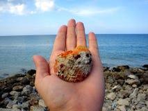 Hand die shell houdt Royalty-vrije Stock Afbeelding