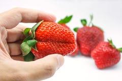 Hand die verse aardbeien houden Royalty-vrije Stock Foto's