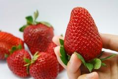 Hand die verse aardbeien houden Royalty-vrije Stock Afbeeldingen