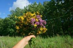 hand die wilde bloemen houden Stock Fotografie