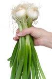 Hand die witte uien met groene stelen houden royalty-vrije stock foto's