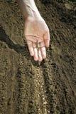 Hand die zaden plaatsen op grond Stock Foto's