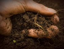 Hand in Dirt Royalty Free Stock Images