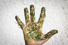 Hand dirty with grass spreads fingers Stock Photo