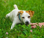 Hand and dog Stock Images