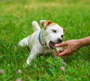 Hand and dog Royalty Free Stock Image