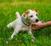 Hand and dog Royalty Free Stock Photography