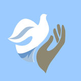Hand and dove Royalty Free Stock Photos