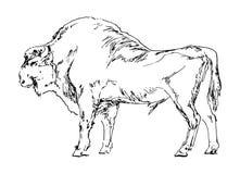 Hand dragen bison Svart buffel på vit bakgrund Skissa vektorillustrationen Royaltyfri Bild