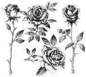 Hand dragen blommauppsättning vektor illustrationer