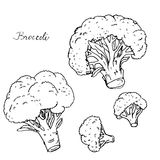 Hand dragen broccoli stock illustrationer