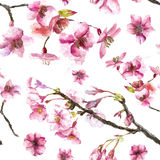 Hand dragen Cherry Blossoms sömlös modell Arkivbilder