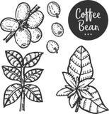 Hand dragen illustration av kaffe Fotografering för Bildbyråer