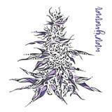 Hand dragen illustration av marijuana vektor illustrationer