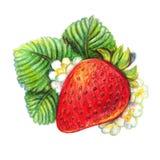 Hand dragen jordgubbe på vit bakgrund arkivfoto