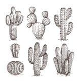 Hand dragen kaktus E r vektor illustrationer