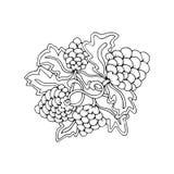 Hand dragen linje konstbeståndsdel för frukt för klotteröversiktsdruva magisk med den blom- prydnaden royaltyfri illustrationer
