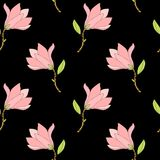 Hand dragen magnoliamodell Royaltyfria Bilder