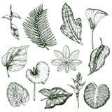 Hand dragen monokromuppsättning för tropiska växter royaltyfri illustrationer