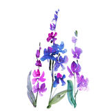 Hand dragen orkidéblomma Fotografering för Bildbyråer