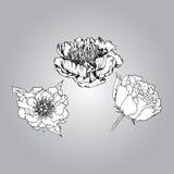 Hand dragen pion Royaltyfria Bilder