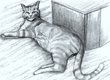 Hand-dragen randig katt royaltyfri illustrationer