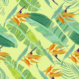 Hand dragen sömlös bakgrund med banansidor och tropiskt F Arkivfoton