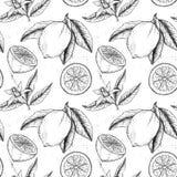 Hand dragen sömlös modell för vektor Samlingar av citroner royaltyfri illustrationer