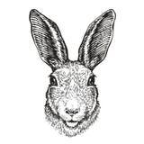 Hand-dragen stående av kanin Påskkaninen, skissar också vektor för coreldrawillustration stock illustrationer