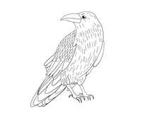 Hand-dragen svart galande Korpsvart skissar fågeln, vektorillustrationen royaltyfri illustrationer