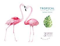 Hand dragen tropisk fågeluppsättning för vattenfärg av flamingo Exotiska fågelillustrationer, djungelträd, Brasilien moderiktig k royaltyfri bild