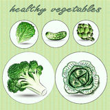 Hand dragen uppsättning av gröna grönsaker Arkivfoton