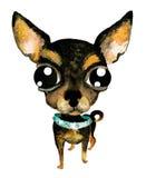 Hand dragen vattenfärgillustration (ingen spåring) gullig hund för chihuahua Arkivbilder