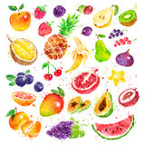 Hand dragen vattenfärguppsättning av frukt Arkivbild