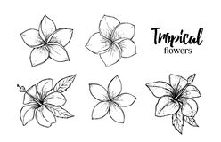 Hand dragen vektorillustration - tropiska blommor unga vuxen människa vektor illustrationer