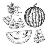 Hand dragen vektorillustration - vattenmelon Vattenmelonblomning Fotografering för Bildbyråer