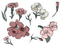 Hand dragen vektoruppsättning av blommor i klotter vektor illustrationer